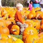 Pumpkin Picking on Long Island